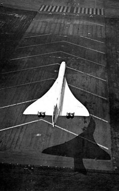 Concorde // Beautiful Bird