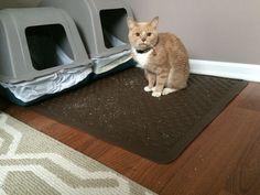 Cat Litter Box Giving Headache