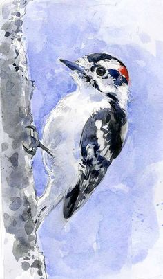 woodpecker sketch by Lita Judge