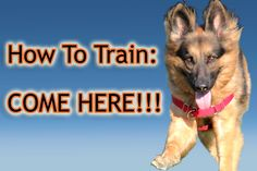 This video is about reliably teaching your dog how to come to you when you call them. In order to teach this behavior, we have to first consider why a dog wi...