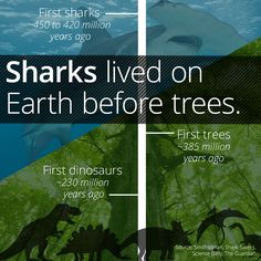 Sharks Have Been Around For Longer Than Trees