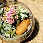 Succulent Terrarium, DIY from Free People