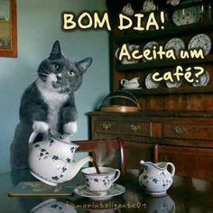 Funny memes jokes humor cat quotes 25 New ideas I Love Cats, Cute Cats, Funny Cats, Funny Animals, Cute Animals, Memes Humor, Spanish Jokes, Mexican Memes, Super Funny Memes