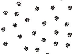 5 X Paw Print Tissue Paper 20' X 30' - 24 Sheet Pack >>> You can get additional details at the image link.