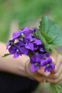 Violet's Medicinal and Food Uses from Blog Castanea