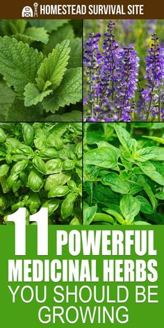 Herbal Medicine 11 Powerful Medicinal Herbs You Should Be Growing - In addition to adding flavor to food, many medicinal herbs are high in antioxidant, anti-inflammatory, and antiseptic properties. Herbal Plants, Medicinal Plants, Herbs Illustration, Cooking Herbs, Herb Garden Design, Herbs Garden, Garden Pests, Garden Ideas, Types Of Herbs