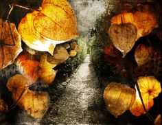 'Lantern Alley' - Päivi Hintsanen