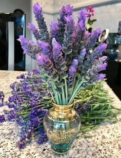 French and English lavender from my garden