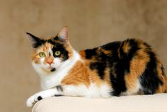 Ever wonder why Calico cat are striped? Epigenetics! I explain how this works in this article. These concepts formed some of the basis for the genetics subplot in the Korvali Chronicles.