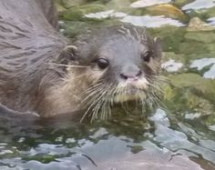 Wetland Centre saw a delivery of otters in June