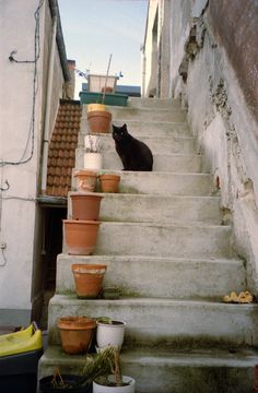 A fun image sharing community. Explore amazing art and photography and share your own visual inspiration! Studio Ghibli, Labo Photo, Kiki's Delivery Service, Pretty Pictures, Cute Cats, Funny Cats, Scenery, Cute Animals, Kitty