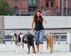 Da unsere Haushunde in den letzen Jahrzehnten immer mehr die Stellung eines Freundes und Sozialpartners eingenommen haben, entfernen sich viele Hundehalter mehr und mehr von den Bedürfnissen ihrer Tiere, wodurch der Umgang mit diesen häufig unnatürlich wird.