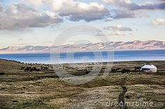 Herds near Song Kol- Kirghistan mountains