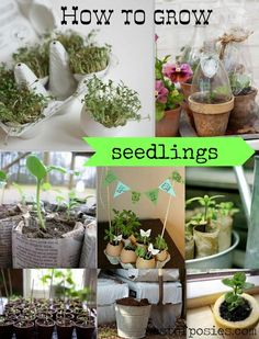 Who's ready for Spring?  Here's some great ideas on How to Grow Seedlings inside so you'll be ready to plant by Spring!