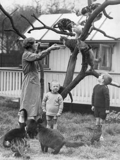 tree of cats and children, black and white photo, vintage, mother