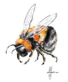 A gallery of sketches, cartoons, drawings and paintings by digital artist and illustrator Artmagenta. Bee Painting, Watercolor Paintings, Animal Drawings, Art Drawings, Bee Drawing, Bee Tattoo, Insect Art, Bee Art, Love Illustration