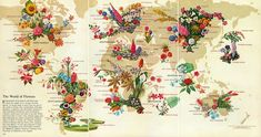 The World of Flowers (1968) - Vivid Maps