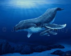 Humpback Whale - 8x10 Fine Art Print From An Original Painting By Jeffrey Jenney - Ocean Art on Etsy, $25.00