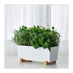 This is lovely - Bittergurka from IKEA
