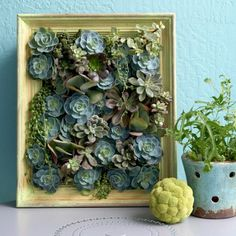 Living pictures made with succulent plants...I can't wait to make one to hang in my living room!!