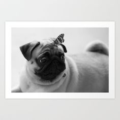 Pug Art Print by xenz - $17.68