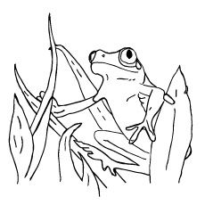 Coloring Page Of Surinam Frog Frogs Coloring Pages Color Animals