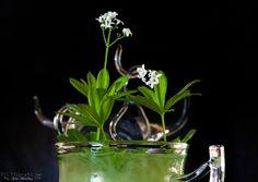 Cocktail mit Waldmeister