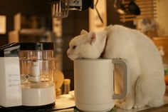 """""""Should I kill myself, or have a cup of coffee?""""     Photo by ©azukibean*"""