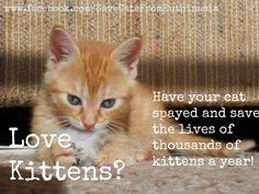 Spay and neuter saves lives!