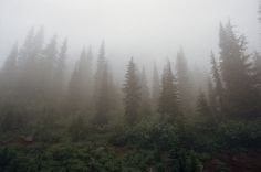forest and flowers: mt. rainier, part three by manyfires, via Flickr