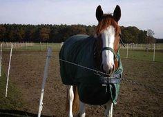 Für viele Pferde gehört die Decke zum Winter