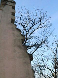 #rome #villaborghese #nature #artificial #tree