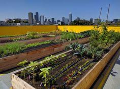 Rooftop Farm | Capitol Hill Urban Cohousing daktuin moestuin uitzicht