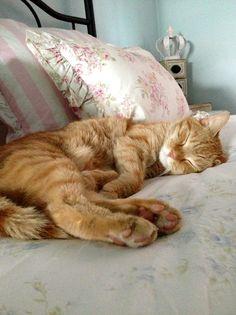 Ahhh...a kitty life...
