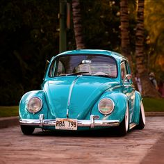 87 best beetle images in 2019 volkswagen beetles vw bugs vehicles rh pinterest com