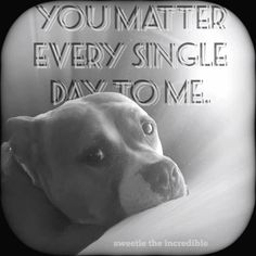 Training Tips, Dog Training, Pitbull Facts, Dog Shaming, People Talk, Dog Toys, Your Dog, Pitbulls, Dog Cat