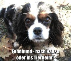 http://www.tierrecht-anwalt.de