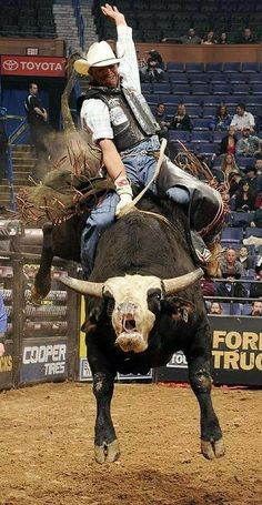 Professional Bull Riding ~ National Finals Rodeo in Las Vegas.Cowboy Up! Rodeo Cowboys, Real Cowboys, Rodeo Events, Professional Bull Riders, Bucking Bulls, Rodeo Time, Today In History, Bull Riding, Cowboy And Cowgirl