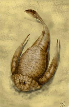 Bothriolepis panderi