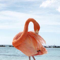 Esse perfil foi dominado por flamingos 😜 Ainda tenho tanta foto linda dessa última viagem e ultimamente só tenho ficado em casa (de… Flamingo Beach Aruba, Instagram, Wanderlust, Travel, Home, Babydoll Sheep, Amor, Profile, Pictures