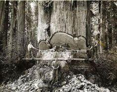 Great old lumberjack picture.