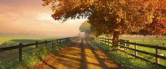 nature, Photography, Landscape, Fence, Dirt Road, Morning, Sunlight, Trees, Fall, Field, Grass, Mist, Australia HD Wallpaper Desktop Background