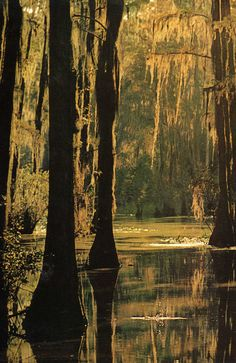 southern swamp with cypress trees and spanish moss Louisiana New Orleans, Louisiana Swamp, Louisiana Usa, Beautiful World, Beautiful Places, In Natura, Cypress Trees, Cypress Swamp, All Nature