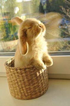 Sun loving bunny