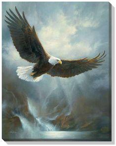 www.wildwings.com DirectionsWEB fn_webcart_zoomImage.php?img=bald-eagle-wrapped-canvas-art-by-russ-docken-F225144432d.jpg
