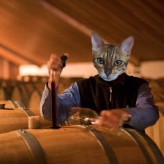 The 'Judgment of Paris' takes place in France - Today In Cat History, May 24, 1976.