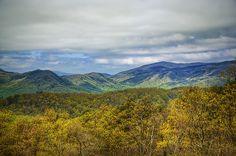 'Great Smoky Textures' ~ Great Smoky Mountains National Park, TN