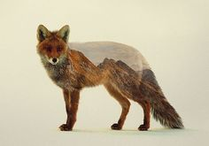 double exposure fox photoshop art - Google Search