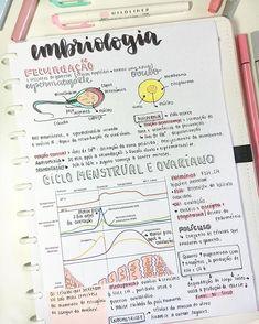 Quem gosta de embriologia coloca um coração ❤️❤️ Sou apaixonada por esse assunto!!!! #resumosonhodamedicina Medicine Notes, Medicine Student, College Notes, School Notes, Study Biology, Science Notes, Study Organization, School Study Tips, Pretty Notes
