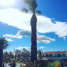 #tbt #throwbackthursday #blueskies #palmtrees #greeksky #cloudporn #holidaymode #summerfun #holidaylife  #goldencoastlove